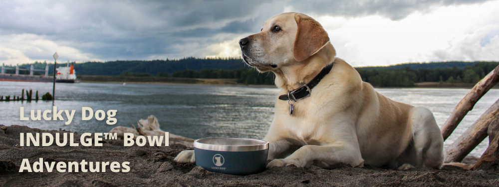 Lucky Dog INDULGE™ 8 Stainless Steel Dog Bowl