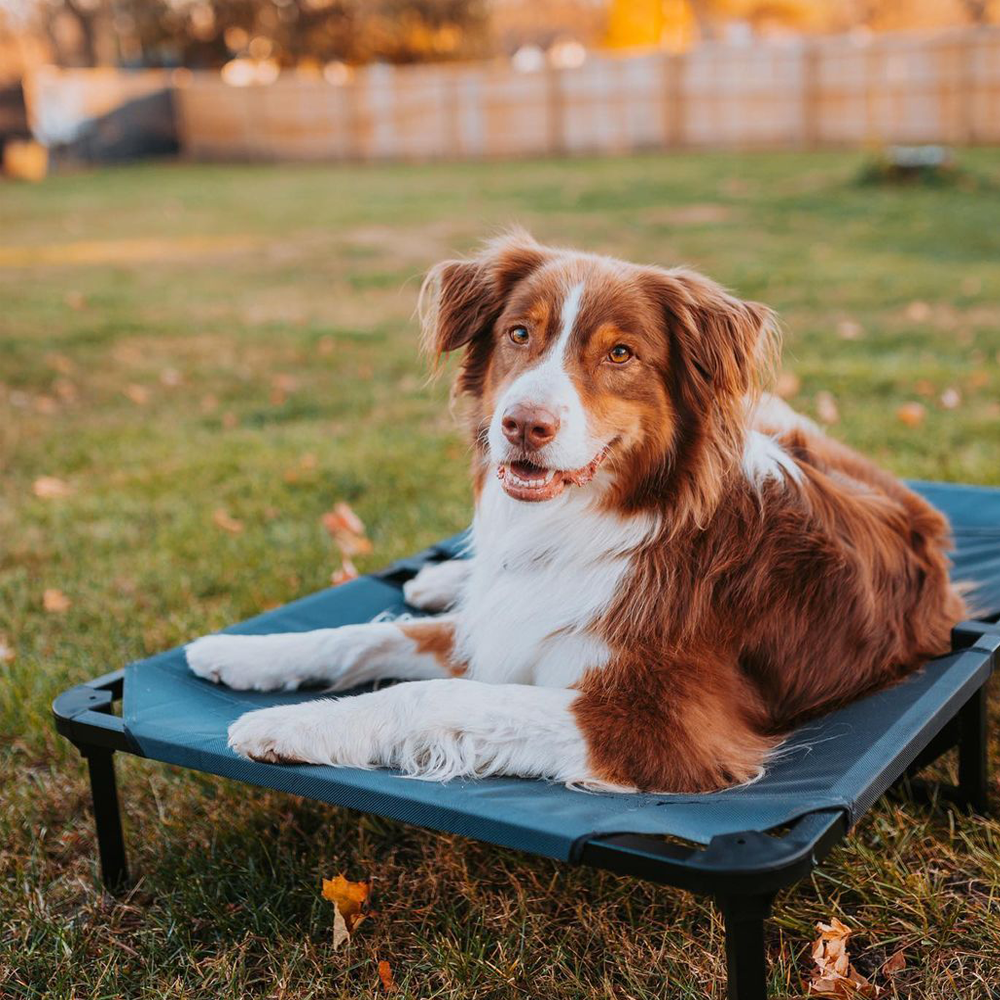 Lucky Dog Elevated Pet Bed, Featured Roryandtucker